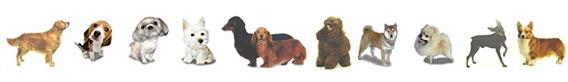dog-wans3-15